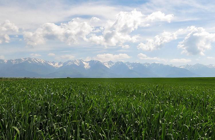 11. Etappe: Sigishoara (RO) - Arpasu de Sus (RO) 83 km