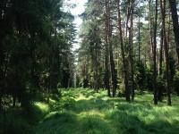 In den Wäldern Schlesiens