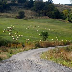 Extensive Landwirtschaft in Siebenbürgen