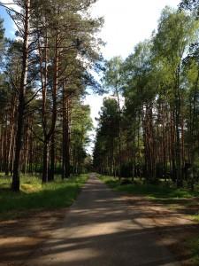In den Wäldern Brandenburgs