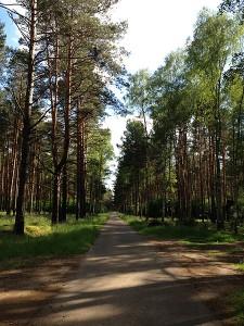 In den Wäldern Bradenburgs