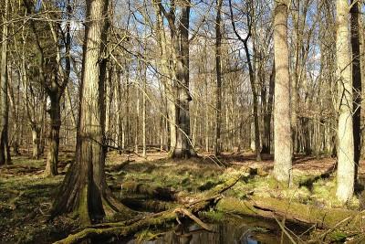 im Grumsiner Forst