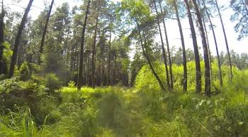 In den Wäldern Schlesiens.